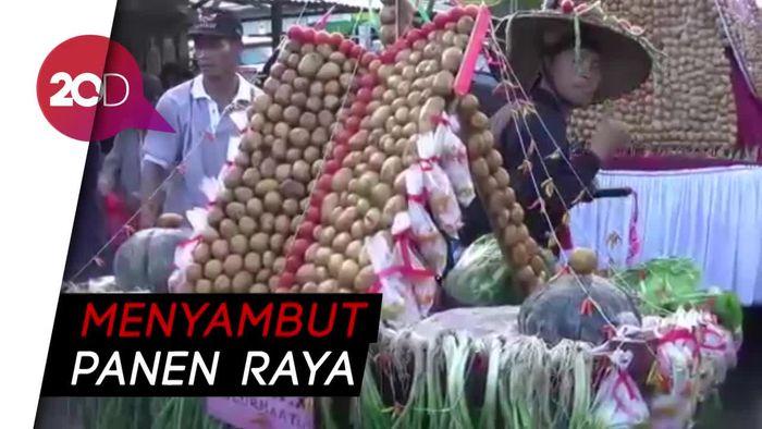 Keseruan Festival Rebutan Kentang di Minahasa Selatan