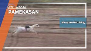 Karapan Kambing Dusun Garuk Blumbungan Pamekasan