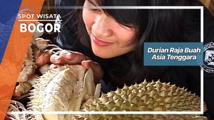 Durian Raja Buah Asia Tenggara, Bogor