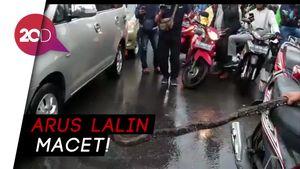 Hii! Ular 3,5 Meter Muncul di Jalan Protokol Palembang yang Kebanjiran
