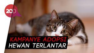 Gemasnya Lihat Kucing Peliharaan Jadi Artis Hollywood