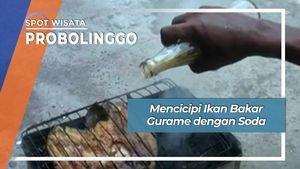 Mencicipi Ikan Bakar Gurame dengan Soda, Probolinggo