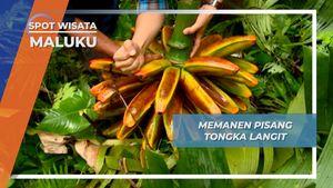 Pisang Tongka Langit, Buah Eksotis Khas Ambon Maluku