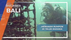 Rumpon Secret Bay Bali, Surganya Frogfish Si Primadona Biota Terumbu Karang