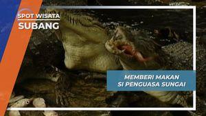 Belanja Ikan di Pelelangan, untuk Makan si Penghuni Muara Subang