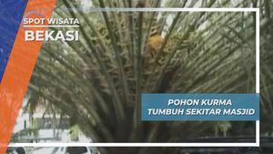 Pohon Kurma Tumbuh Sekitar Masjid, Bekasi