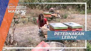 Mengunjungi Peternakan Lebah Legendaris di Malang, Jawa Timur