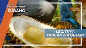 Legit dan Dagingnya Maknyus, Cita Rasa Khas Durian Matahari Subang