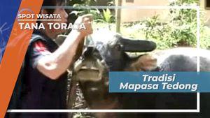 MaPasa Tedong, Tradisi Arak-Arakan Kerbau Kurban Rambu Solo di Tana Toraja Sulawesi Selatan