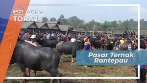 Tedong Bonga, Kerbau Belang di Pasar Ternak Rantepau Tana Toraja Sulawesi Selatan