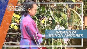 Anggrek, Simbol Kemewahan rasa Cinta Dari Bunga Berharga Tinggi dari Kalimantan