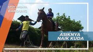 Kuda Besar nan Gagah Asal Jerman di Kecamatan Ngamprah Bandung Barat