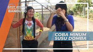 Susu Domba, Tawaran Minuman Pagi yang Menantang di Kecamatan Ngamprah Bandung Barat