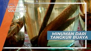 Tangkur Buaya, Minuman Vitalitas Khas di Kota Tomohon Minahasa Sulawesi Utara