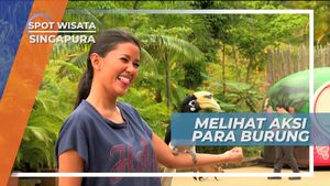 Melihat Atraksi Burung di Kebun Binatang Singapura
