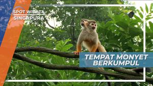 Square Monkey, Tempat Berkumpul Monyet di Kebun Binatang Singapura