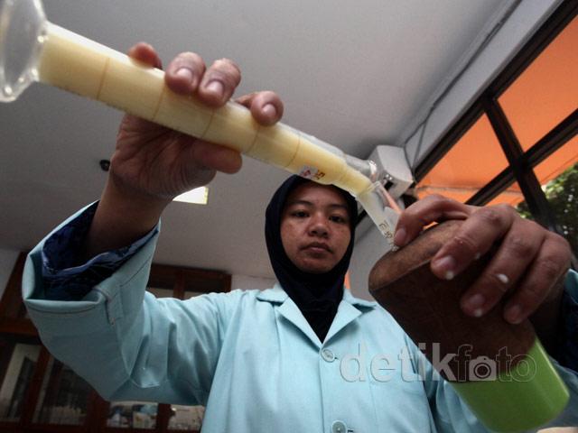 Indonesia Surplus Sperma Sapi