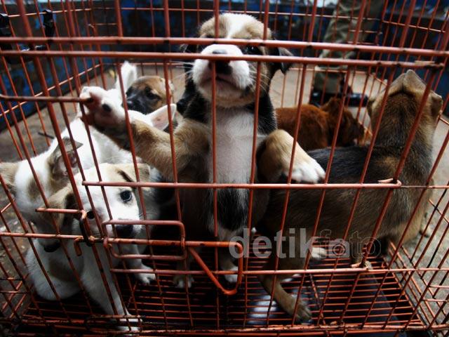 Razia Anjing dan Kucing Liar Cegah Rabies