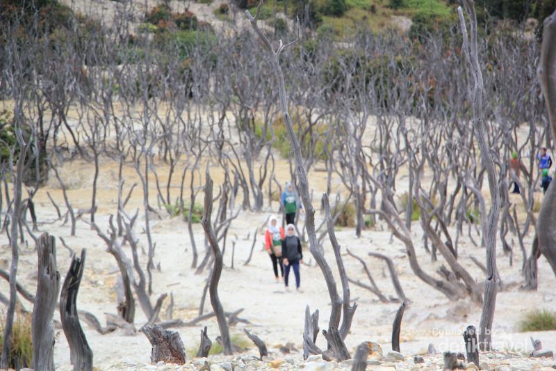 Permalink to Hutan Mati, Tempat yang Wajib Dikunjungi di Papandayan