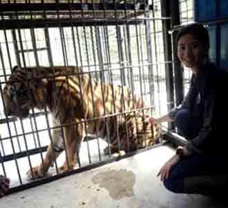 Qory Sandioriva dan Harimau Sumatera