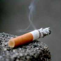 Ternyata Rokok Mengandung Darah Babi!