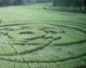 \Lingkaran UFO\ di Sleman Tempati 7 Petak Sawah Siap Panen