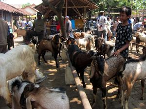 Pasar Kambing Menjelang Qurban