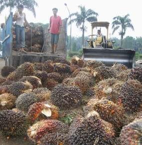 Dahlan Iskan Minta BUMN Perkebunan Borong Lahan Malaysia