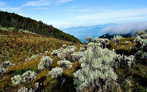 Alun-alun Surya Kencana, Gunung Gede (Flickr/ Andri Suanto)