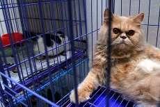 Jelang Lebaran, Anjing & Kucing Padati Tempat Penitipan Hewan