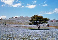 Bertabur Bunga di Taman Paling Cantik se-Jepang