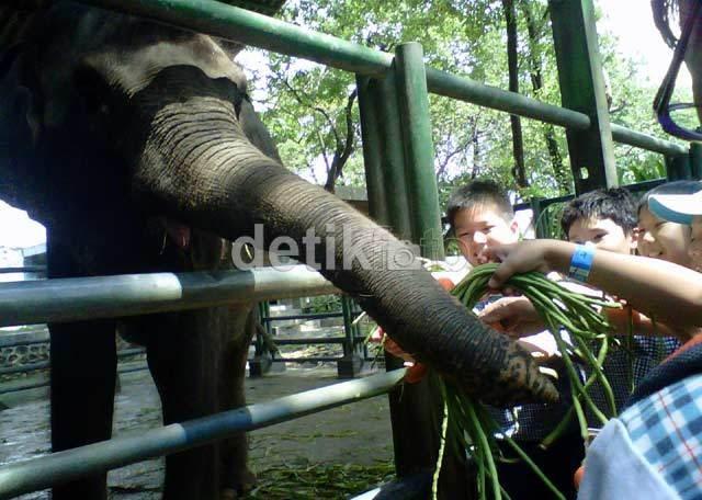 Tak Ada Izin Pemeliharaan, 3 Gajah Disita dari Taman Waduk Gajah Mungkur