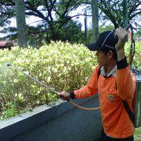 Ratusan Ulat di Taman Citarum Bandung Disemprot Racun