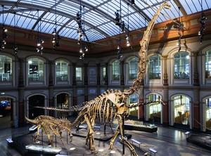 10 Museum Dinosaurus Paling Keren di Dunia