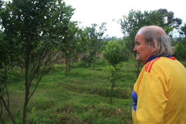 Paul Cumming sedang melihat kebun jeruk miliknya. Jeruk di pohonnya sangat sering dicuri orang yang jahil (aqwam/PFI/detiksport)