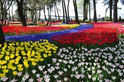 Ini Dia Surga Bunga di Jepang