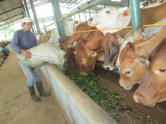 Jelang Lebaran, Harga Daging Sapi di Bandung Sudah Merosot