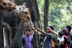 Kebun Binatang Ragunan Ternyata Terbesar Kedua di Dunia