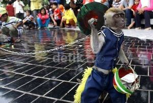 Topeng Monyet dengan Ciri Seperti Ini Bisa Tularkan Penyakit