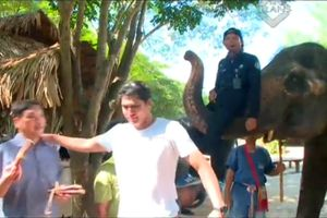 Ketakutan Diangkat Gajah Thailand