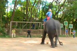 Adu Penalti Dengan Gajah