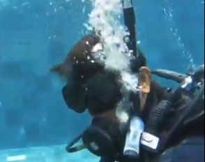 Tya Ariestya Trauma Dengan Diving