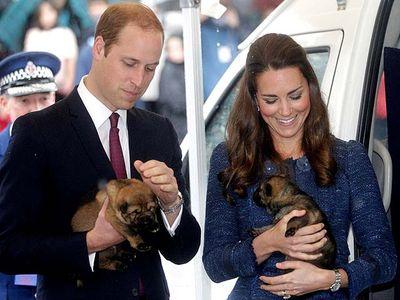 Aww, Kate Middleton Bermain dengan Anak Anjing
