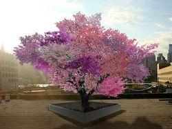 Pohon Hybrid Ini Dapat Hasilkan 40 Jenis Buah dalam Satu Pohon