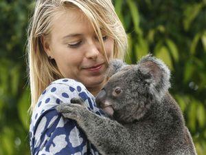 Ketika Sharapova Bermain dengan Koala