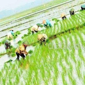 50.000 Babinsa akan Dikerahkan Jadi Tenaga Penyuluh Pertanian Dadakan