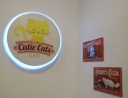 Bermain dengan Para Kucing Lucu di Cutie Cats Cafe, Kemang
