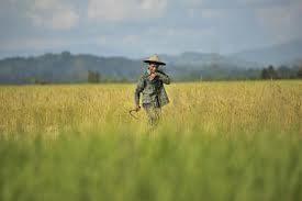 Kementan Kerahkan Mahasiswa, Dosen Hingga Tentara Jadi Penyuluh Pertanian