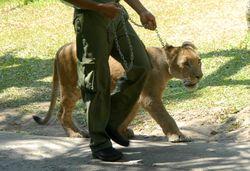 Daging Kanguru dan Kuda Australia Jadi Santapan Utama Karnivora