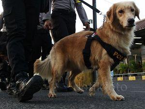 Anjing Pelacak Amankan Arus Mudik di Stasiun Senen